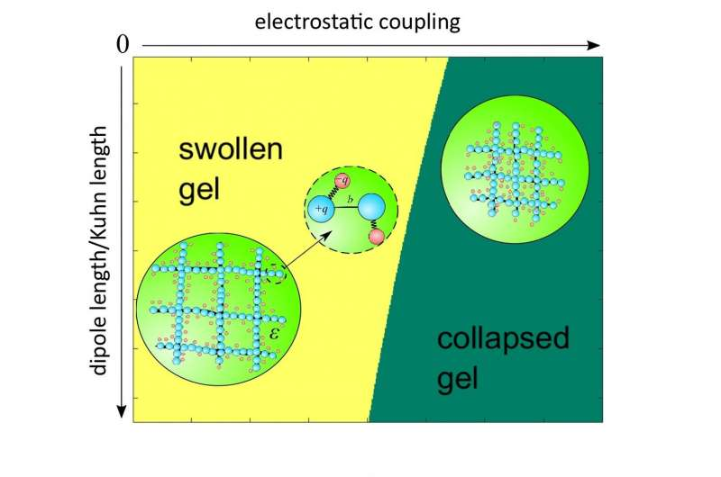 Researchers develop microscopic theory of polymer gel